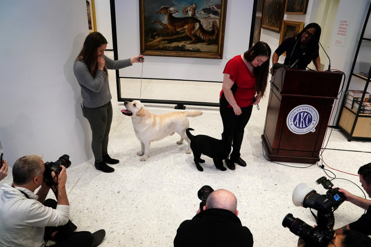 Labrador retriever fetches top US dog breed honor for record 28th year