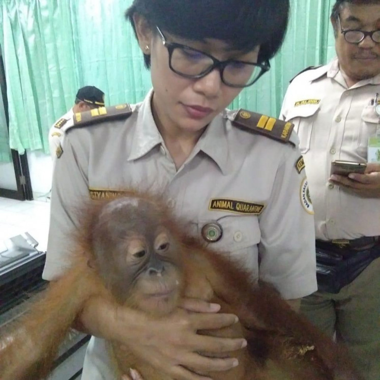 An officer holds the 2-year-old orangutan.