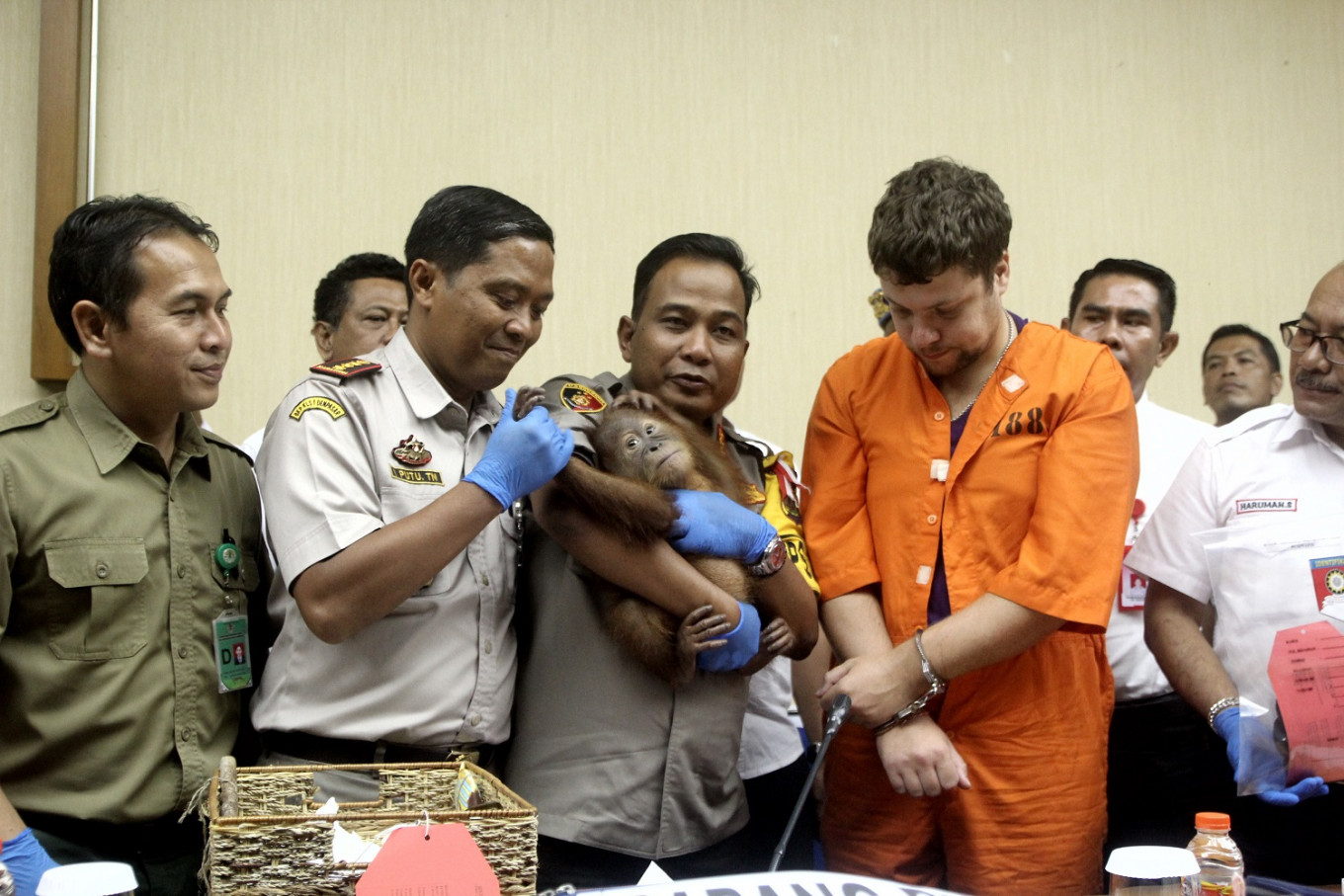 Russian faces 5 years in prison for trying to smuggle baby orangutan