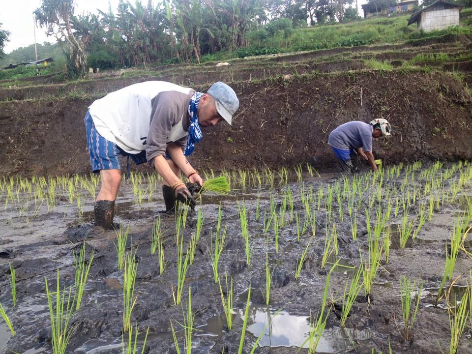 Seorang wisatawan asal Jepang bernama Take yang sedang melakukan aktivitas menanam padi |