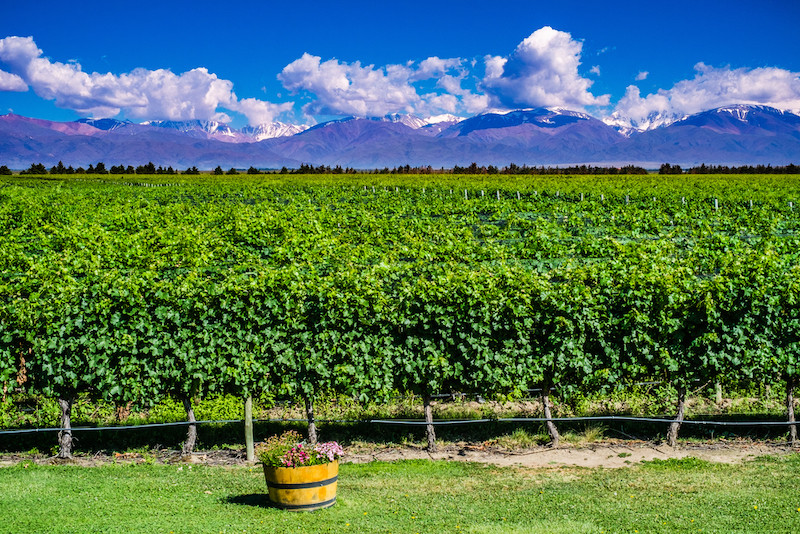 Malbec World Day In April A Toast To Argentina S Viticulture
