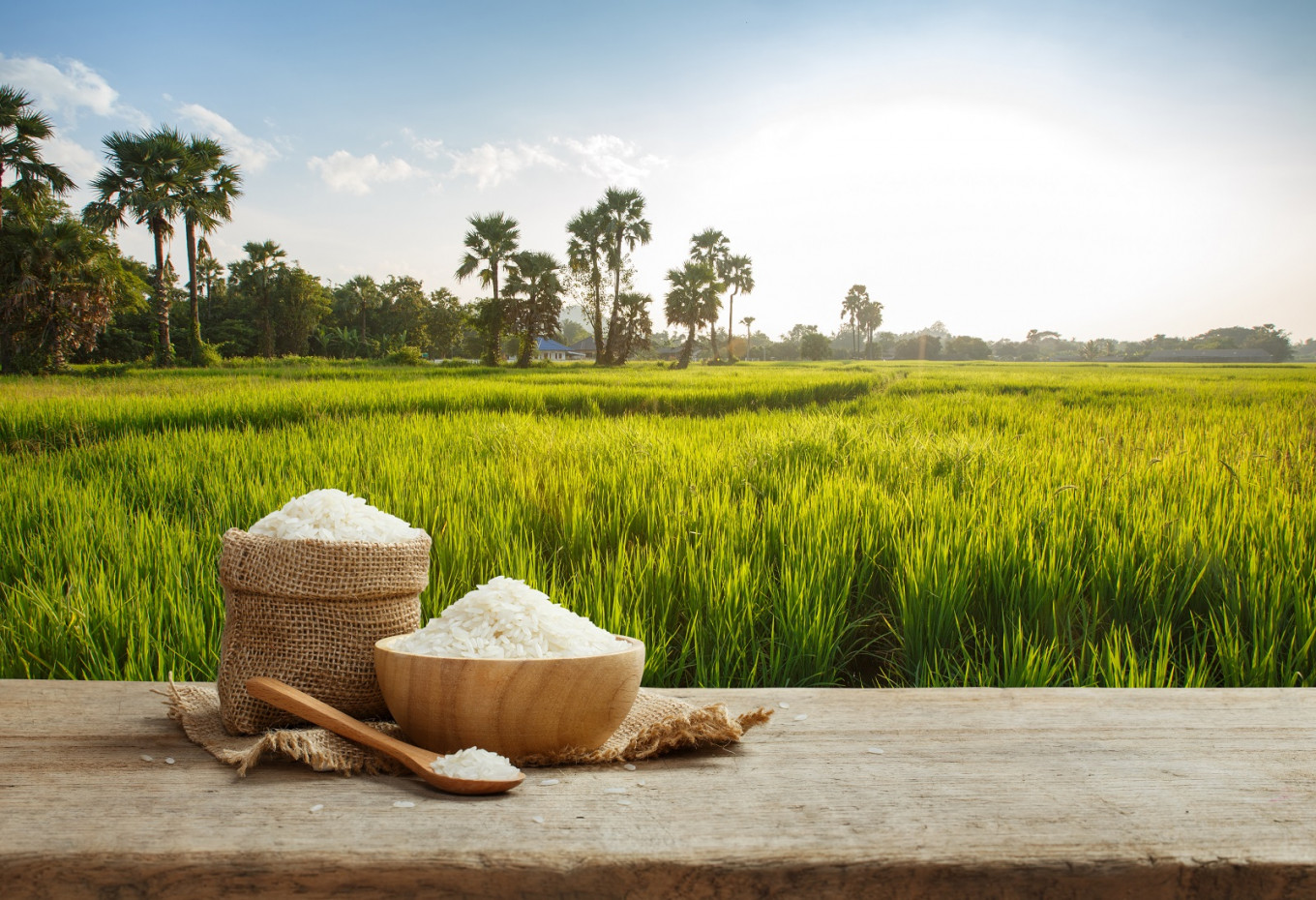 IRRI variety increases Indonesia's rice production