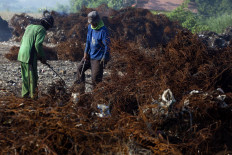 Villagers sort steel waste after being burned. They would sell it for Rp 1,500 per kilogram. JP/Sigit Pamungkas