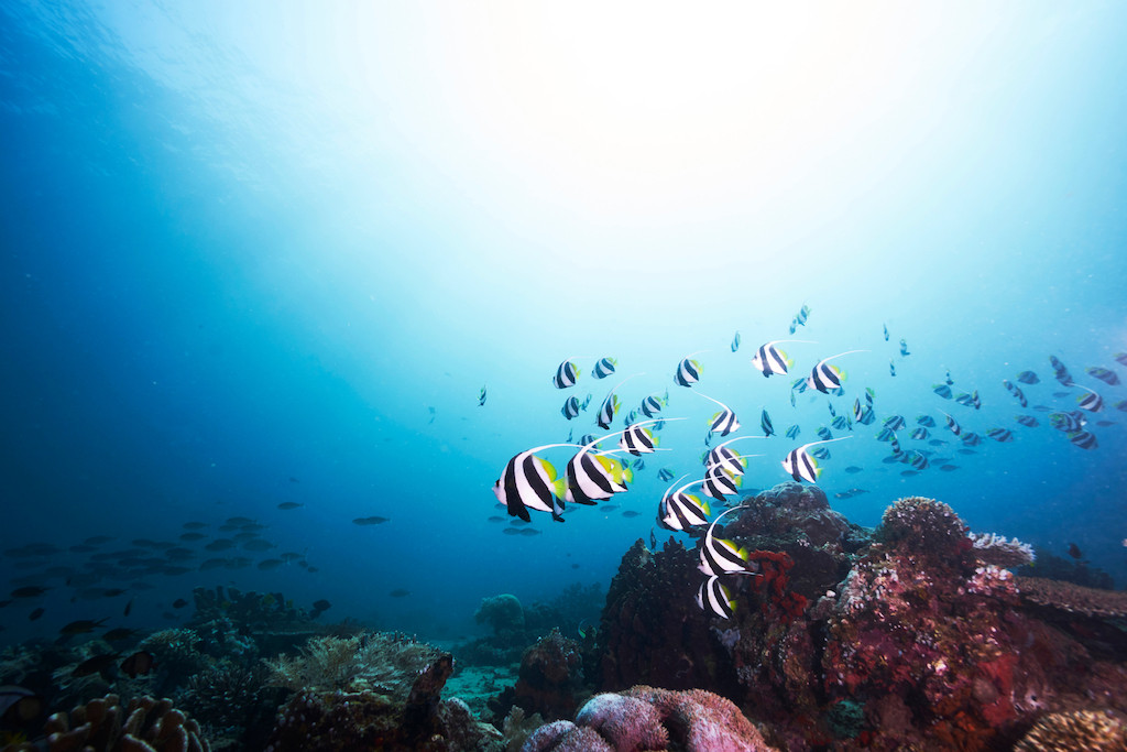 Indonesia intends to attract more Japanese tourists at Marine Diving Fair in Tokyo