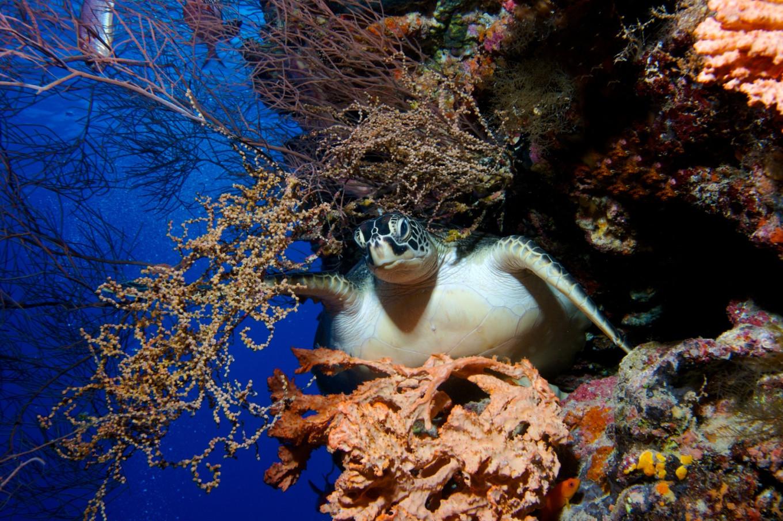 Riau Islands Police foil illegal turtle sales