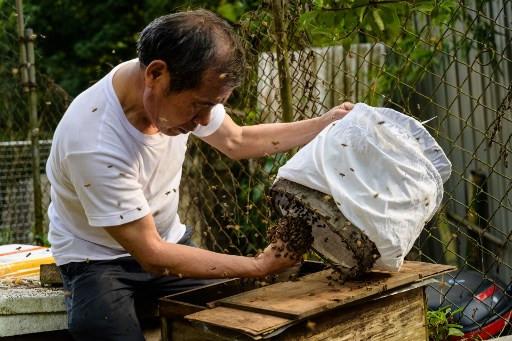 The Hong Kong beekeeper harvesting hives barehanded