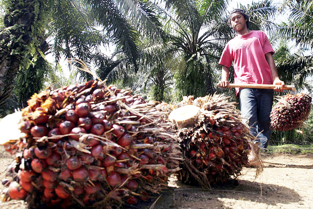 Palm oil monthly exports rise in July: Gapki