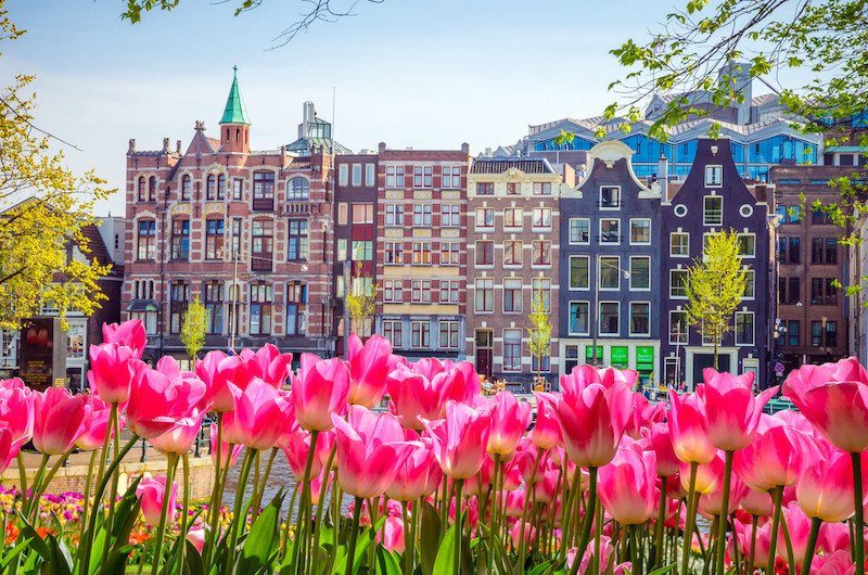 Dutch tulip forecast: brilliant, with a chance of tourists