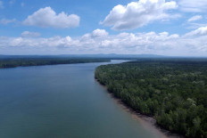 Pristine: An aerial view of the mangrove forest zone in Teluk Bintuni regency, West Papua. JP/Jerry Adiguna