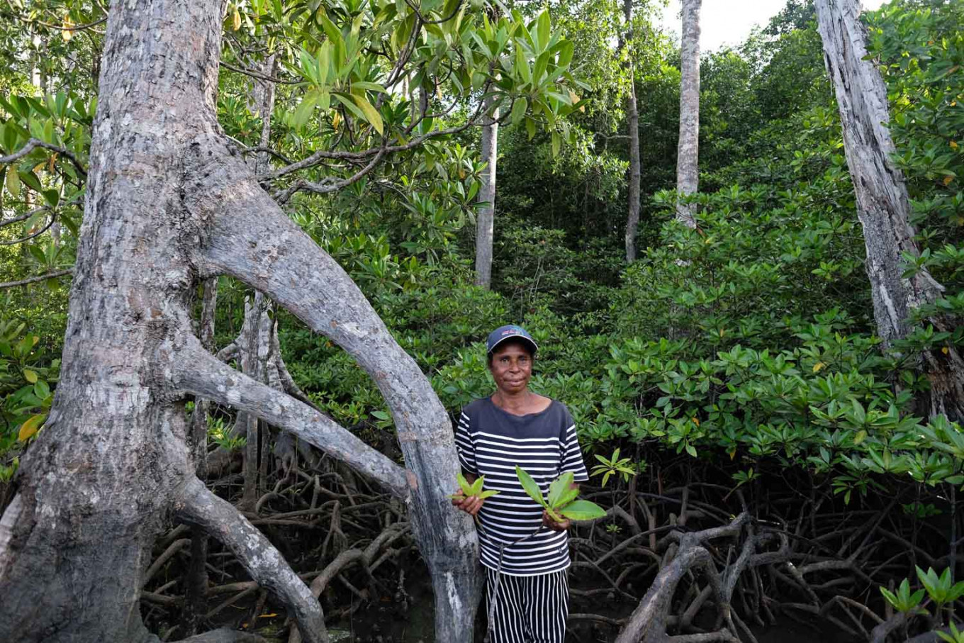 Guiding hands: Salma Tatua from the Maitefa tribe group shows the way to the mangrove forest zone on Babo Island, Teluk Bintuni regency, West Papua. JP/Jerry Adiguna