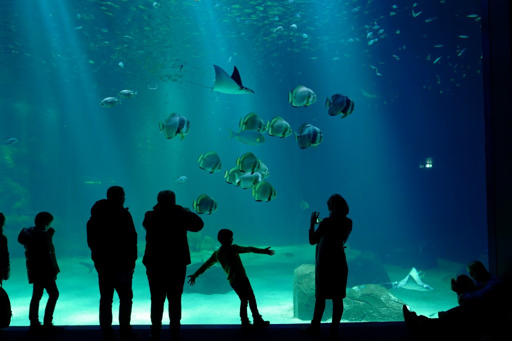 French aquarium sued over hammerhead shark deaths