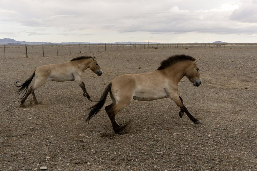 Modern breeding reduced horse diversity within centuries: Study