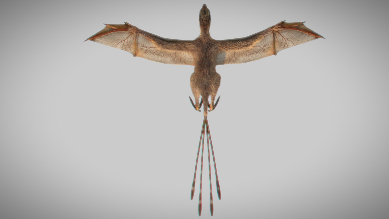 Bat-winged dinosaur was intriguing detour in evolution of flight