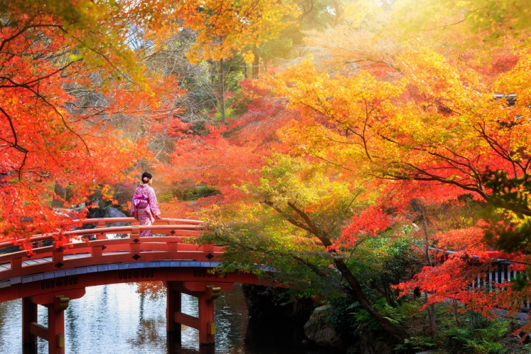 Watch and wonder: Japan's tree leaves display their colorful hues to the maximum during the month of autumn. Fall in love with nature's true beauty here.