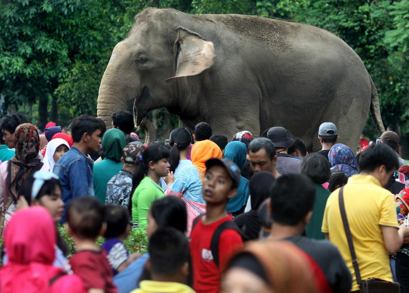 BKSDA Aceh probes death of young elephant found in oil palm plantation