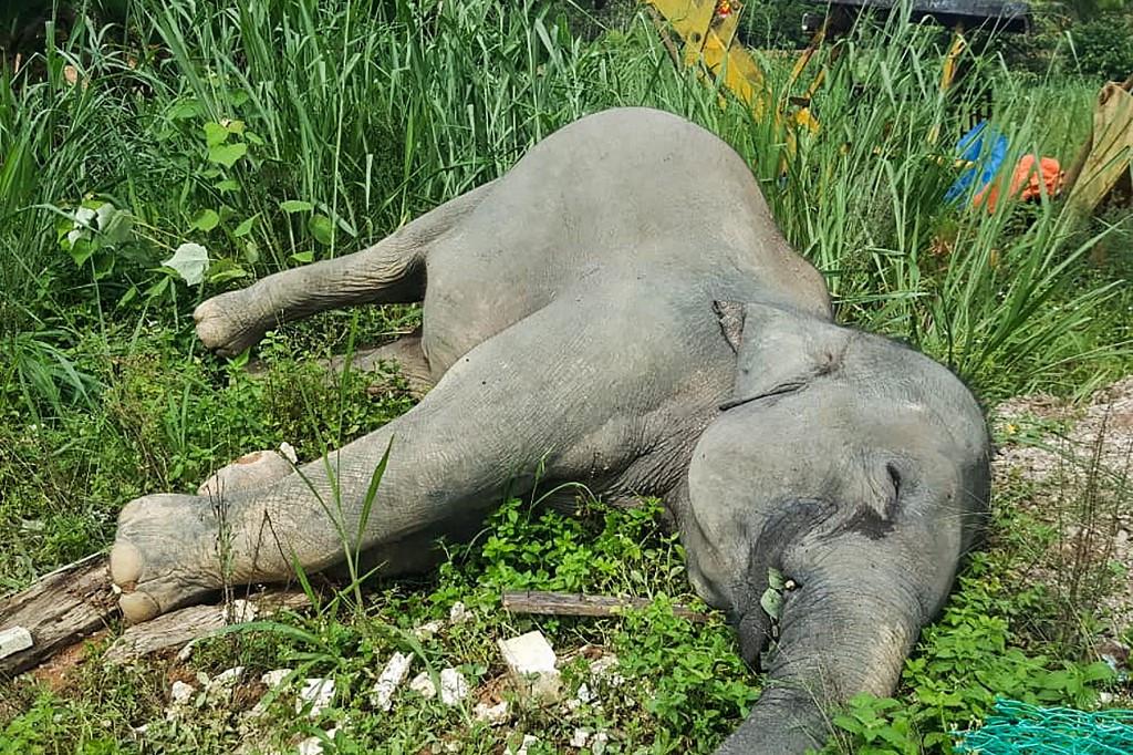 Three elephants found poisoned in Malaysia