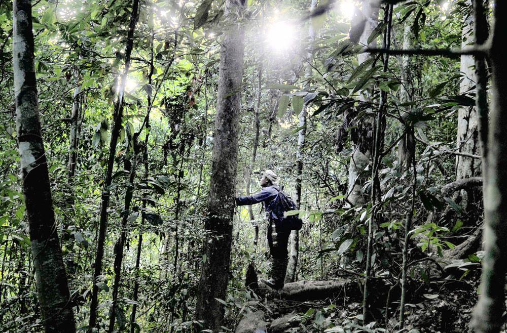 LIPI biology center identifies 12 Indonesian trees facing extinction