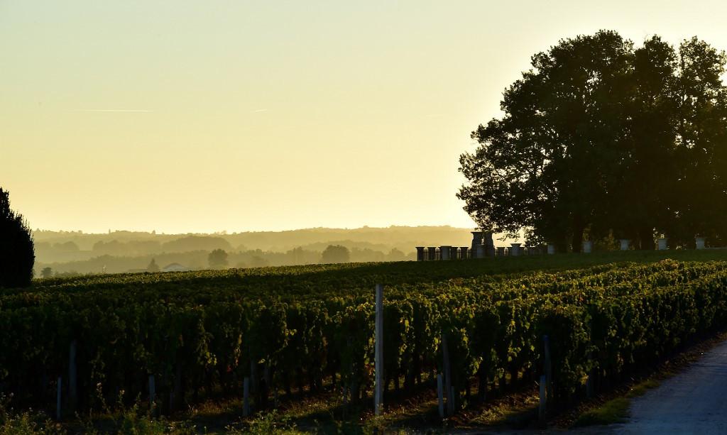 Grapevine timeline: DNA shows France's oldest grape varieties