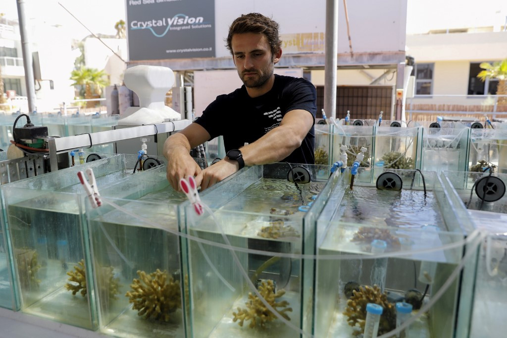 Israeli coral rescue plan needs chisel and deep blue sea