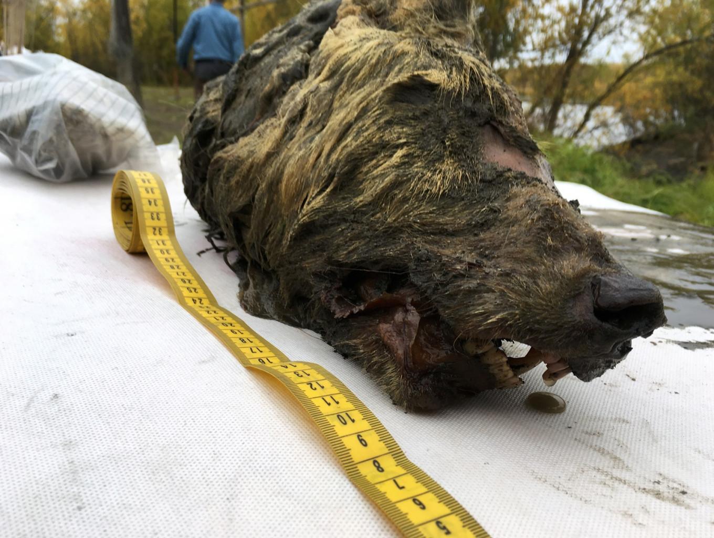 Russian scientists probe prehistoric viruses dug from permafrost