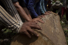 Villagers work together to push teak lumber. JP/Sigit Pamungkas