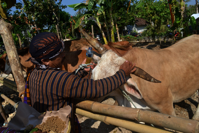 In Gunungkidul, villagers express gratitude for their livestock