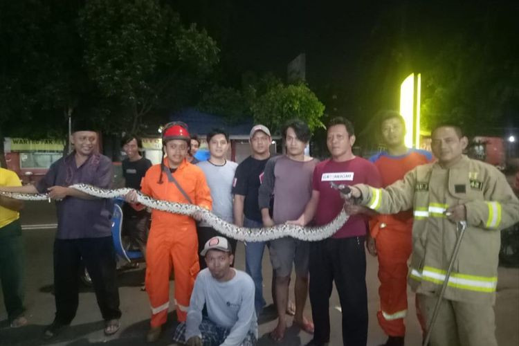 Five-meter python discovered in East Jakarta
