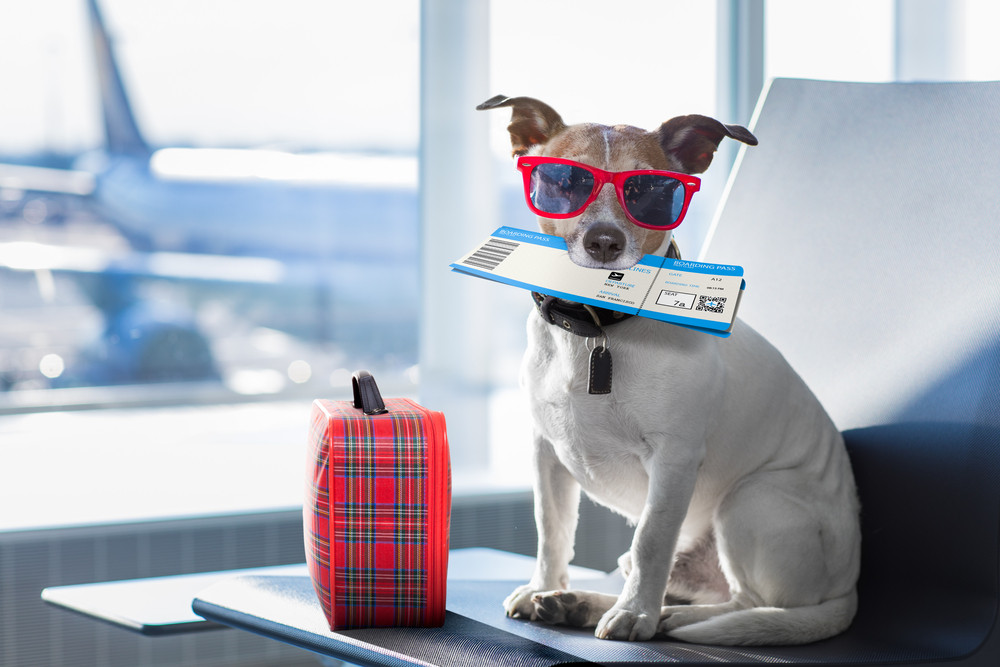 Alaska Airlines named best airline for flying with your pet