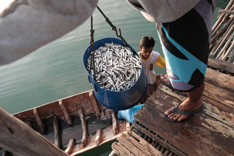 Fresh catch: Fishermen of Tanjung Binga village in Belitung island cure their fish in salt to maintain freshness. JP/Donny Fernando