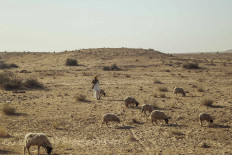 A local man herds sheep in the heat of the desert. JP/Irene Barlian