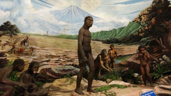 Human fossils, 300,000 years older than Sangiran man, found in Bumiayu