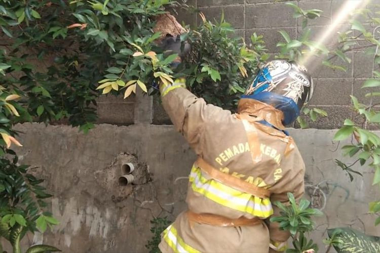 The multifaceted roles of Jakarta firefighters