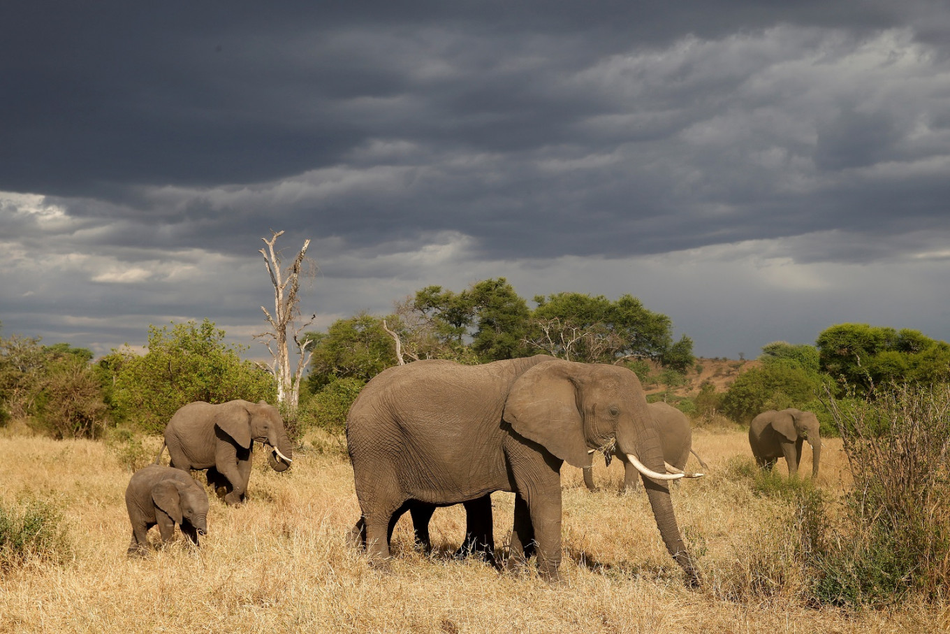 Tanzania says elephant, rhino populations rebounding after anti-poaching crackdown