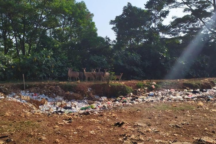 Roaming deer in South Jakarta causes social media commotion