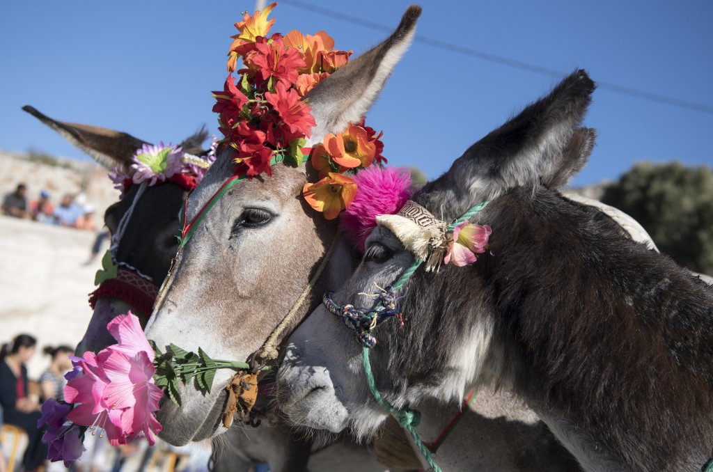 'Cleopatra' wows Morocco village at donkey pageant