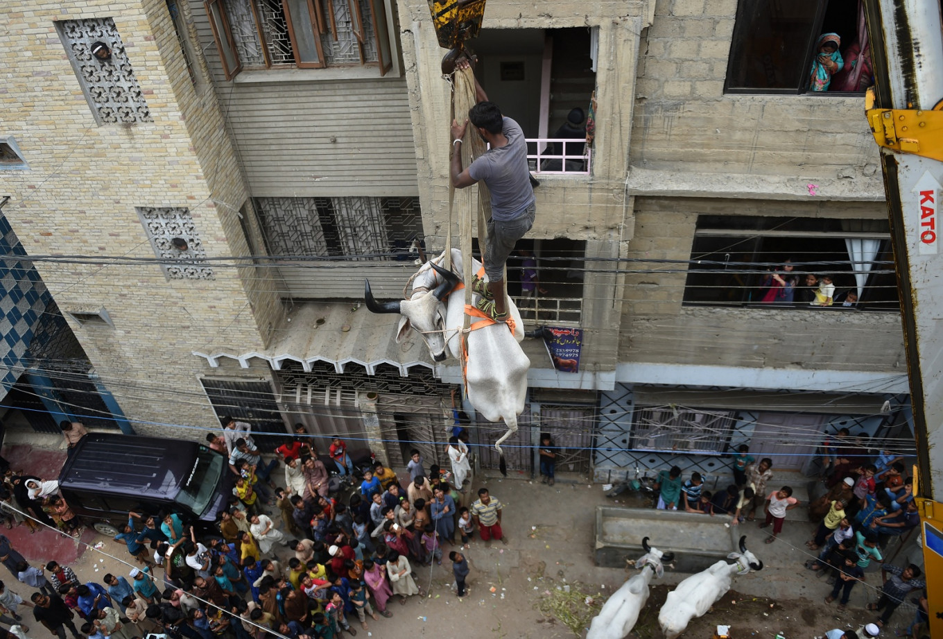 High steaks: Cows go from roofs to plates in Pakistan for Eid