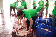 An attendant cuts qurban (sacrificial) meat at Istiqlal Mosque in Central Jakarta on Sunday. The cutting process used both a conventional technique and meat cutters. JP/Syelanita