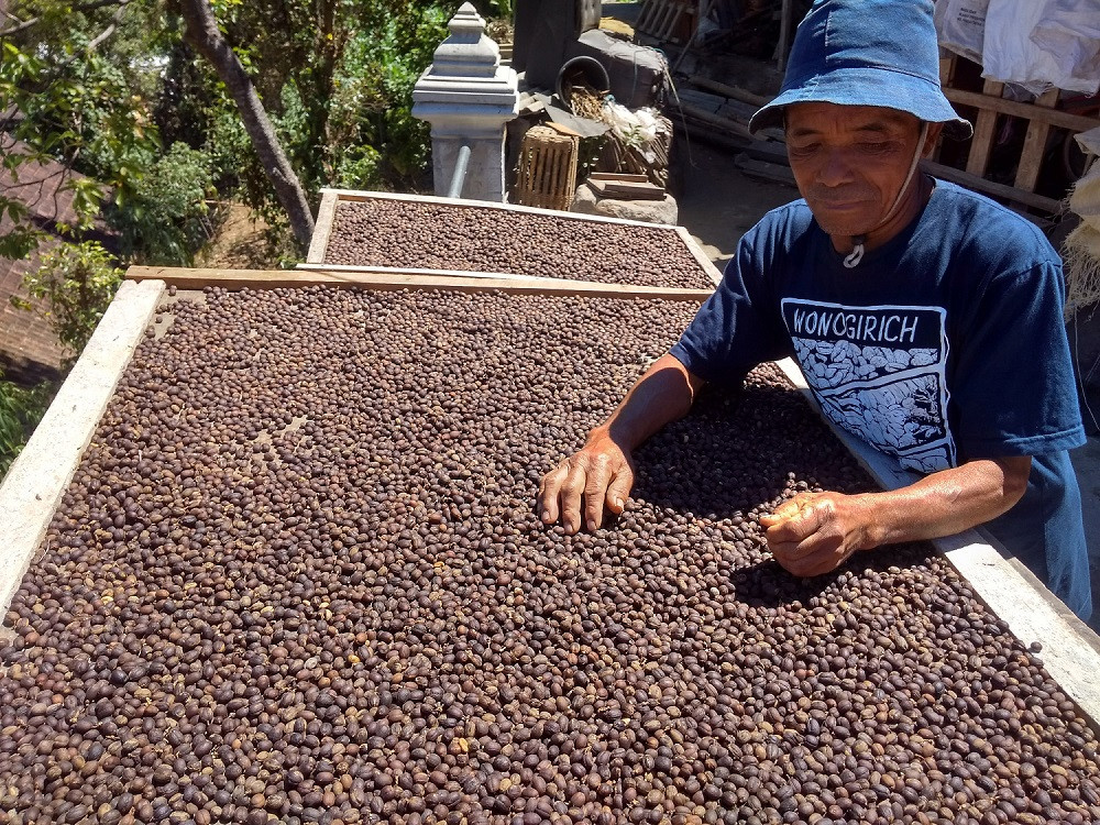 Sular inspects his coffee beans as they are dried.