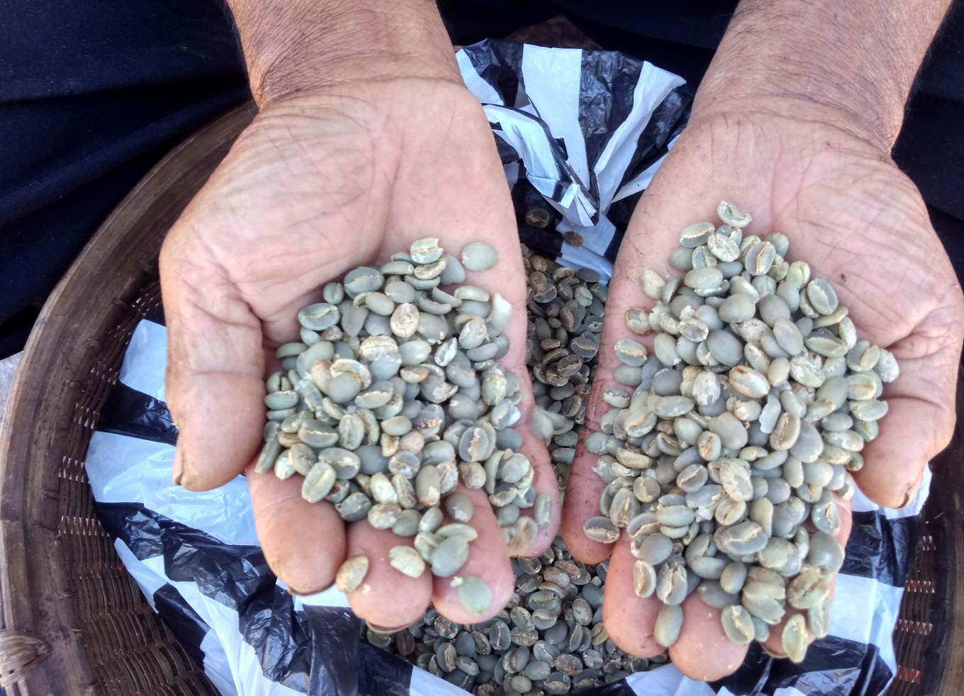 Wonogiri green coffee beans are now worth Rp 70,000 (US$4.9) per kilogram.