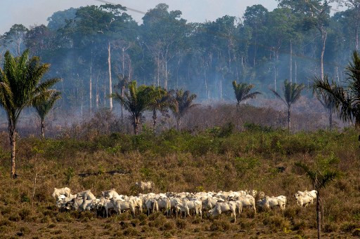 Brazil's army fights Amazon fires after hundreds more flare up