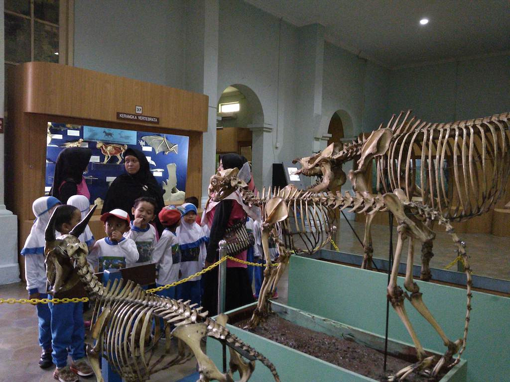 A group of students visit the old Bogor Zoology Museum in Bogor, West Java.