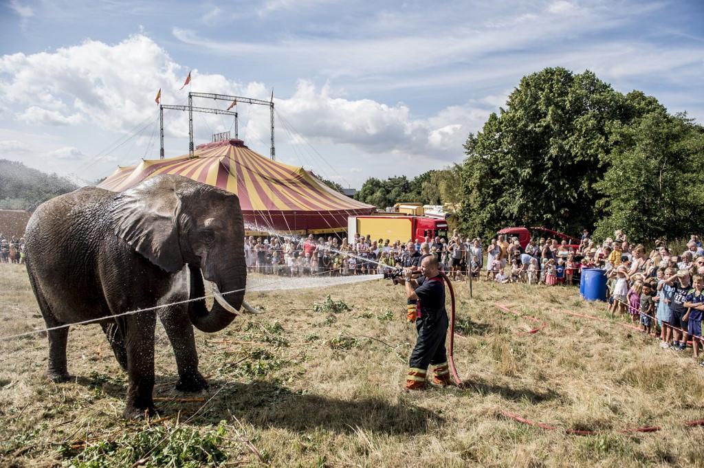 Denmark to retire its last four circus elephants