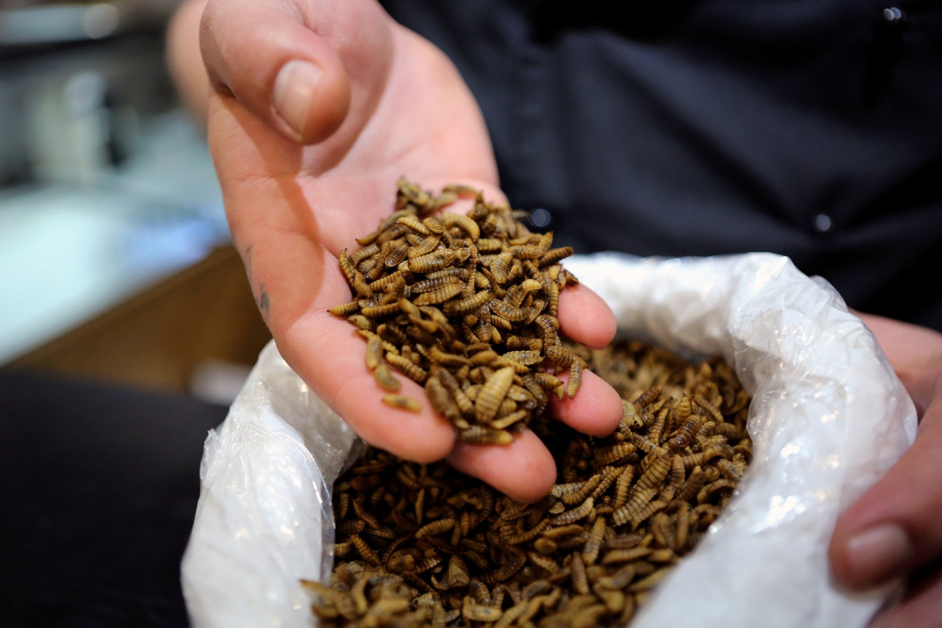 South Africans get the bug: Cape Town diner serves insect-only dishes