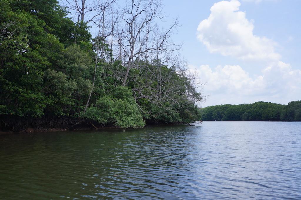 The vast wetlands around the Graha Indah mangrove center in Balikpapan, East Kalimantan.