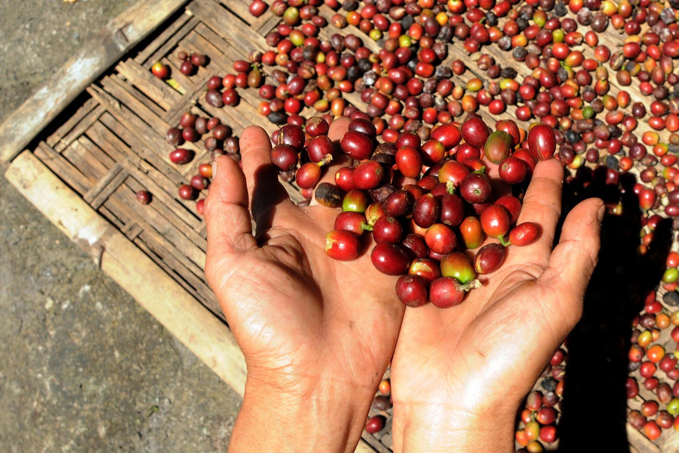 Espresso may cost more as drought wilts Indonesia's coffee