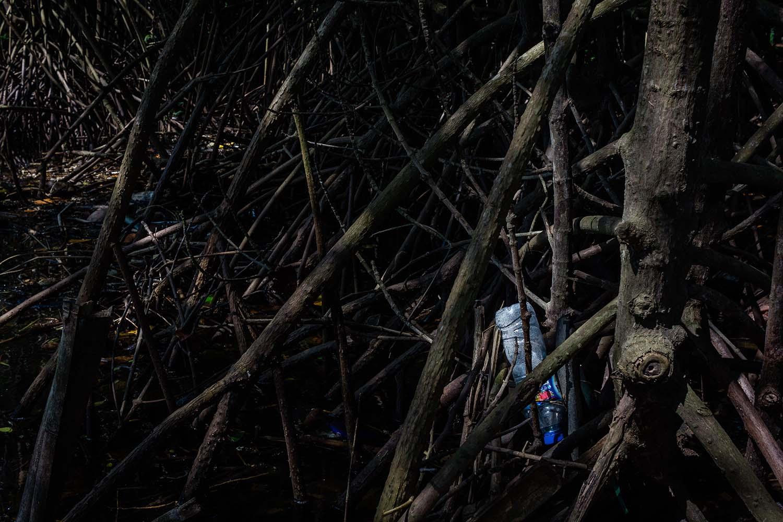 Plastic bottles get trapped between mangrove roots. JP/Anggertimur Lanang Tinarbuko