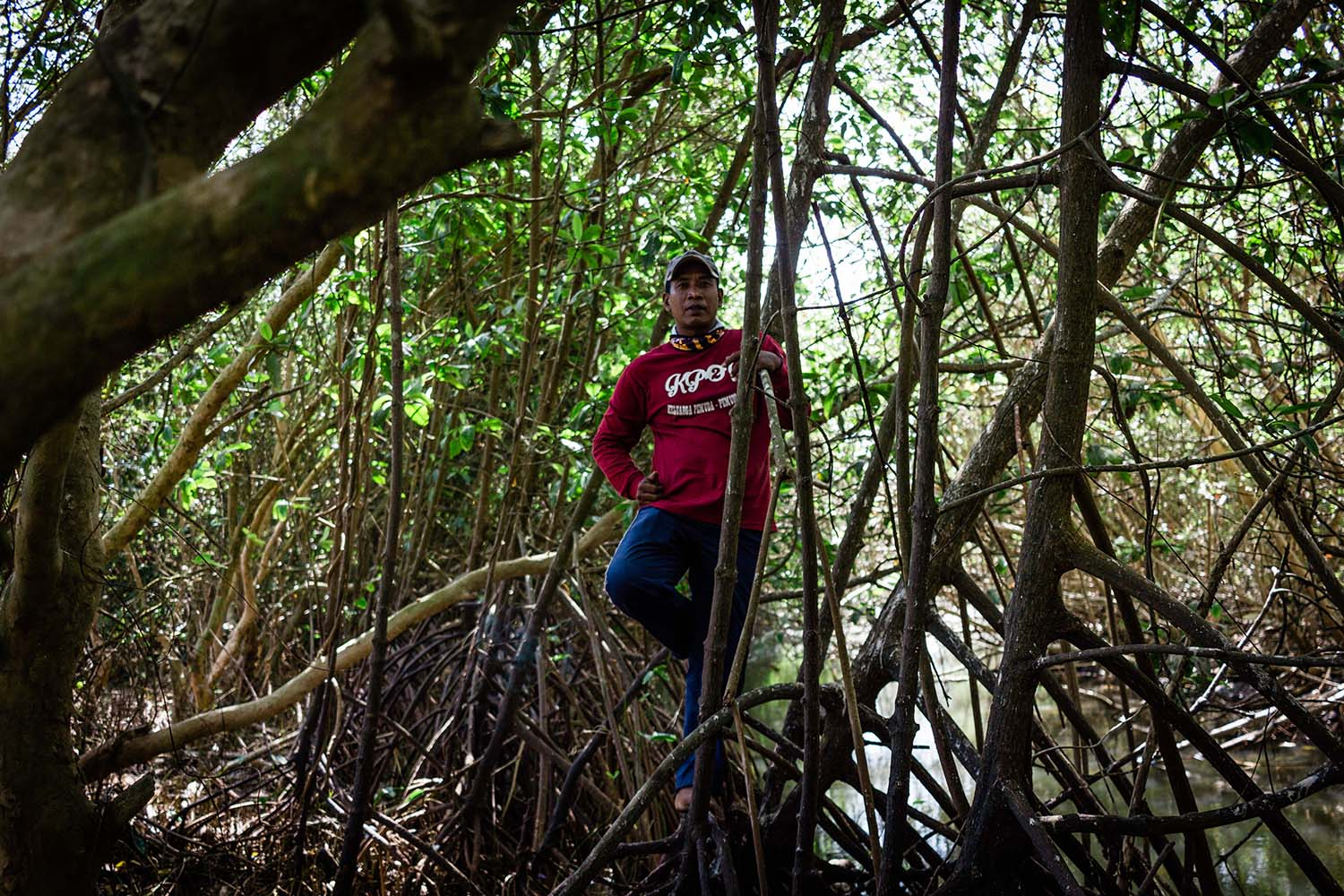 Antarmoro poses among the strong mangrove roots. JP/Anggertimur Lanang Tinarbuko