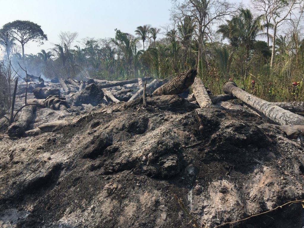 More Than 2 Million Animals Perish In Bolivia Wildfires Environment The Jakarta Post