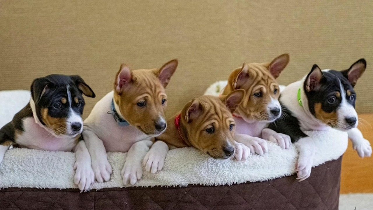 Thailand unveils puppies with royal pedigree
