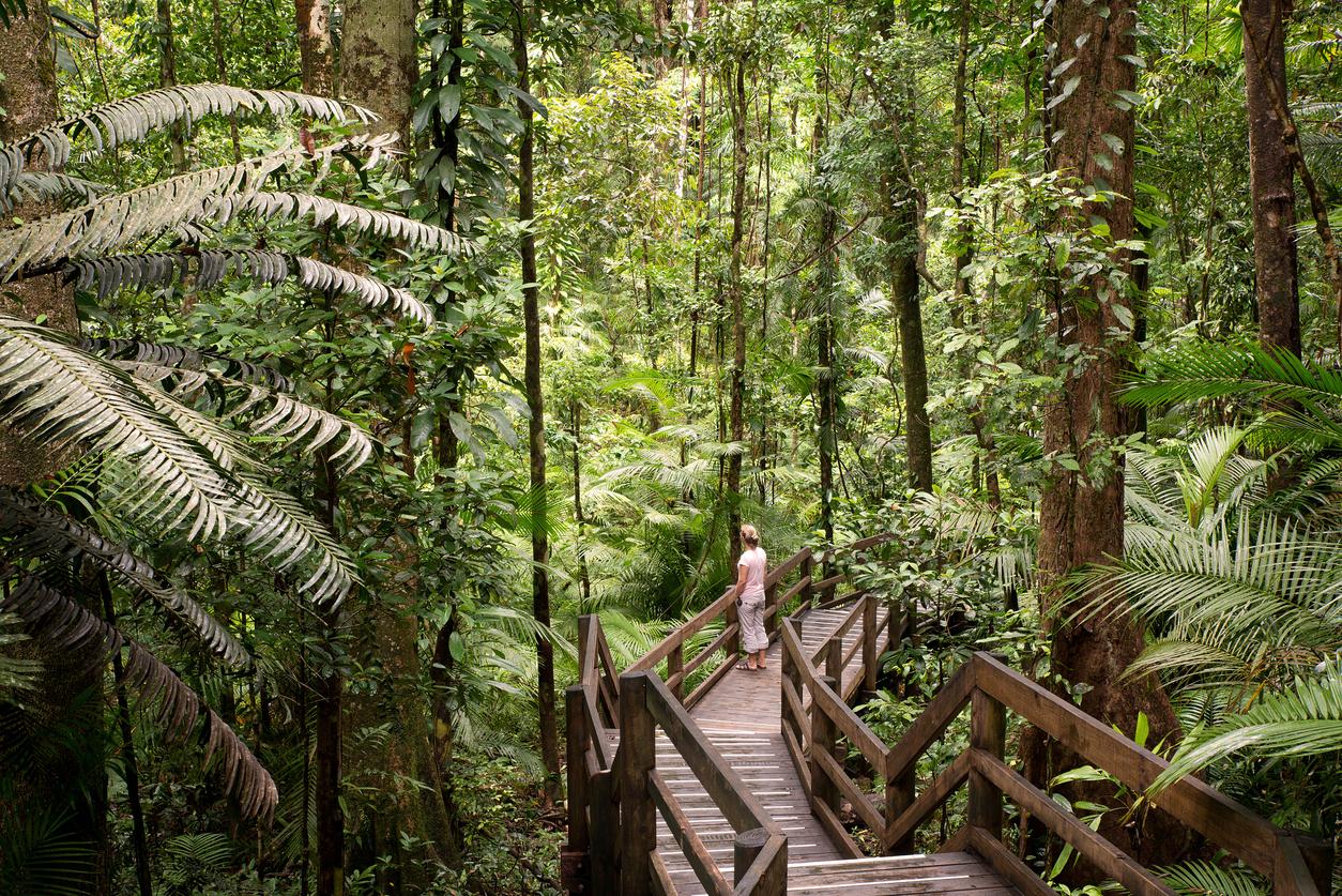 Tourist dies in Aussie jungle zipline fall
